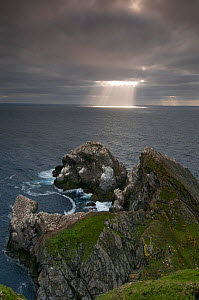 Gannet (Morus bassanus) colony with sun rays shining through clouds onto the ocena, Hermaness, Shetland Islands, Scotland, UK  -  Andrew Parkinson