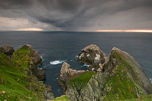 Storm clouds gather ominously behind Hermaness Gannet (Morus bassanus) colony. Shetland Islands, Scotland, UK, July.  -  Andrew Parkinson