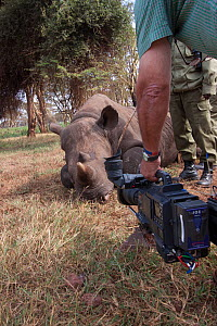 BBC Cameraman Mike Fox filming Elvis, a hand reared Black rhinoceros (Diceros bicornis) at Lewa Wildlife Conservancy, during filming for BBC 'Africa' series, Kenya, July 2012  -  Felicity Lanchester