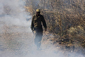 Zambian Wildlife Authority warden walking along a track, with smoke from a grassland fire, South Luangwa National Park, Zambia. June 2011  -  Felicity Lanchester