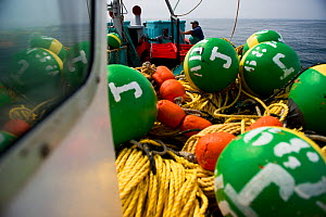Fishing for West coast rock lobster (Jasus lalandii) aboard the James Archer (Oceana Fisheries). Brightly colored buoys used to mark trap locations, in Saldanha Bay and St. Helena Bay, Western Cape, S... - Cheryl-Samantha  Owen