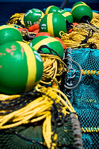 West coast rock lobster (Jasus lalandii) fishing aboard the James Archer (Oceana Fisheries). Brightly coloured buoys used to mark trap locations. Saldanha Bay and St. Helena Bay, Western Cape, South A... - Cheryl-Samantha  Owen