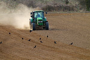 Tractor ploughing cereal fields in dry conditions, East Runton, Norfolk, April 2013  -  Ernie  Janes