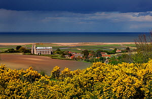 Landscape with Salthouse Church, Gorse (Ulex europeaus) and the North Norfolk Coast, UK, May 2013 - Ernie  Janes