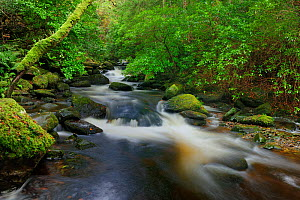 Torc River, Killarney National Park, County Kerry, Ireland. - Robert Thompson