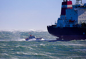 Pilot boat guiding large ship into Narragansett Bay from the rough waters beyond the entrance, Rhode Island, USA, October 2006. - Onne van der Wal