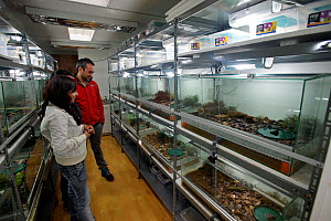 Captive breeding facility of Darwin's Frog (Rhinoderma darwinii) at the University of Concepcion, Chile, December 2012, Vulnerable species, - Bert Willaert