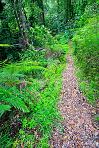 Hiking trail through native forest, Contulmo Natural Monument, Chile, December 2012 - Bert Willaert