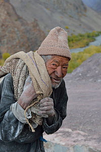 Old man collecting potatoes, Shang Village, Hemis NP, at altitude of 4050m, Ladakh, India, October 2012  -  Eric Dragesco