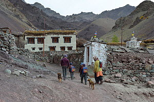Children coming back from school, Shang Village, Hemis NP, at altitude of 4050m, Ladakh, India, October 2012  -  Eric Dragesco