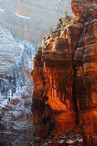 Red Cliffs in Zion Canyon during winter, Zion National Park, Utah, USA December 2012  -  Jouan & Rius,Jouan Rius