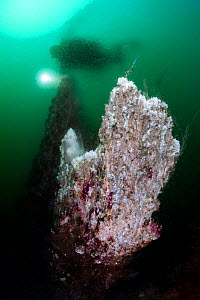 A diver and a hydrothermal chimney. Note that he is obscured by the different temperature waters (from the chimney and the surrounding water) which are unable to mix. The sea water was 4 degrees Celsi... - Alex Mustard,Alex  Mustard