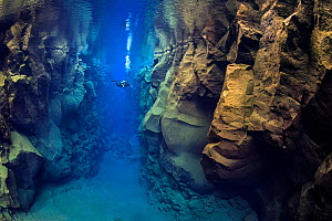 A diver explores Silfra Canyon, a deep fault filled with fresh water in the rift valley between the Eurasian and American tectonic plates at Thingvellir National Park, Iceland. May 2011.  In this phot...  -  Alex Mustard