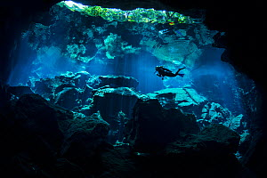 A diver explores Chac Mool Cenote (or sinkhole) Puerto Aventuras, Quintana Roo, Mexico. No release available.  -  Alex  Mustard