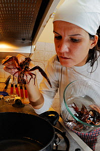 Chef preparing Louisiana Swamp Crayfish (Procambarus clarckii) Europe  -  Visuals Unlimited