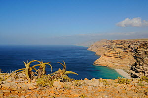 The southern coast of Socotra, Yemen, December 2008  -  Visuals Unlimited