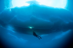 Scuba diver under ice, Sassolo lake, Sambuco valley, Ticino, Switzerland. Model released. - Franco  Banfi