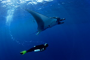 Scuba diver and Manta ray (Manta birostris), San Benedicto, Revillagigedo (Socorro) Islands, Mexico, East Pacific Ocean  -  Franco Banfi