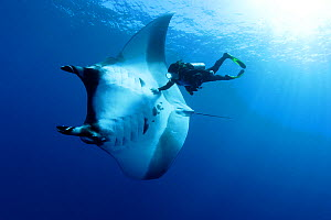 Scuba diver and Manta ray (Manta birostris), San Benedicto, Revillagigedo (Socorro) Islands, Mexico, East Pacific Ocean. Model released. - Franco  Banfi