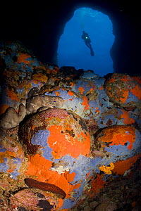 Scuba diver in cave and rocks covered with sponges, Ponza Island, Italy, Tyrrhenian Sea, Mediterranean  -  Franco  Banfi