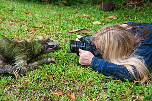 Brown-throated Three-toed Sloth (Bradypus variegatus) photographer taking picture of wild sloth crossing garden of Aviarios Sloth Sanctuary, Costa Rica. - Suzi Eszterhas