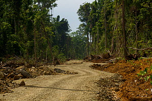 New road cut through pristine lowland rainforest in New Guinea.  This road was built as part of an irrigation project for transmigrants. September 2009  -  Tim Laman