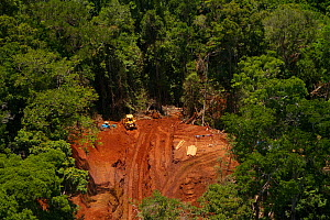 Logging road and forest destruction in pristine area of Waigeo Island, West Papua, New Guinea  -  Tim Laman