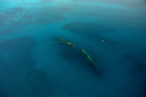 Wreck of the MS Antilla, aerial shot. Ship scuttled 10th May 1940. Aruba, Dutch Antillies.  -  Michael Pitts