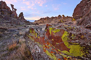 Colorful lichens adorn the bizzare rhyolite formations in southern  Bennett Hills. Idaho. April 2013  -  Floris van Breugel