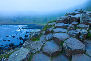 Giant's Causeway, UNESCO World Heritage Site in mist, County Antrim, Northern Ireland, Europe, June 2011.  -  Juan  Carlos Munoz