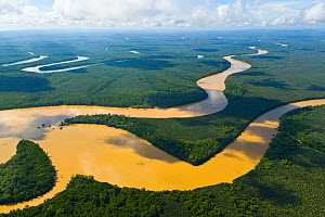 Aerial view of the River Kinabatangan and riverine tropical rainforest, Sabah, Malaysia, Borneo, Asia. - Juan  Carlos Munoz