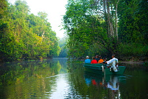 Toursists in a boat moving up the River Kinabatangan through lowland rainforest, Sabah, Malaysia, Borneo. - Juan  Carlos Munoz