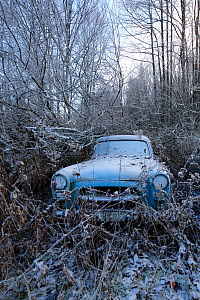 Old abandoned car in 'car graveyard' surrounded by trees in winter, Bastnas, Sweden, December  -  Pal Hermansen