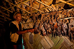 Wancho man pointing to wild animal skulls left over from ceremonial feasts hanging from the roof of a hut, Arunachal Pradesh, India, 2008. - Sandesh  Kadur