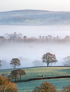 Mist covered countryside in the Exe Valley just north of Exeter, Devon, England. January 2012.  -  Adam  Burton