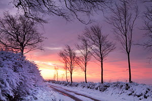 Snow covered country lane at dawn, Exmoor National Park, Somerset, England. January 2012. - Adam  Burton