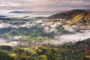 Patches of morning mist float above countryside near the River Brathay, Lake District National Park, Cumbria, England. October 2012.  -  Adam  Burton