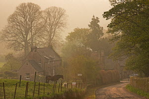 Cottages in the village of Chillingham on a misty Spring morning, Northumberland, England. May 2013.  -  Adam  Burton