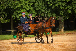 Man in military parade uniform and his wife driving cart, in the Cour D'Honneur, at Le Pin-au-Haras, Orne, Lower Normandy, France. July 2013 - Kristel  Richard