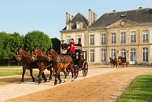 The drivingr (in black) and grooms (in red) from the Haras Du Pin, France's oldest national stud, driving three Norman Cobs, harnessed to an omnibus, in the Cour D'Honneur, at Le Pin-au-Haras, Orne, L... - Kristel  Richard