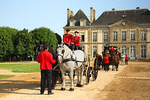 The drivingr (in black) and grooms (in red) from the Haras Du Pin, France's oldest national stud, harness two Percheron horses. Followed by three Norman Cob and two Percheron horses, in the Courd D'Ho... - Kristel  Richard