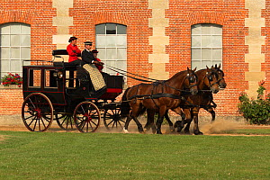 The drivingr (in black) and grooms (in red) from the Haras Du Pin, France's oldest national stud, driving three Norman Cob, harnessed to an omnibus, in the Cour D'Honneur, at Le Pin-au-Haras, Orne, Lo... - Kristel  Richard