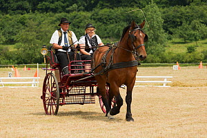 A traditionally dressed couple drivings a Norman Cob, at the Haras Du Pin, France's oldest national stud, at Le Pin-au-Haras, Orne, Lower Normandy, France. July 2013 - Kristel  Richard