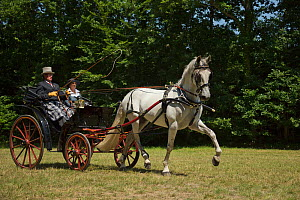 A traditionally dressed couple drivings an Andalusian stallion, harnessed to a horse drawn cart, on the Avenue Louis XIV of the Haras Du Pin, France's oldest national stud, at Le Pin-au-Haras, Orne, L...  -  Kristel  Richard