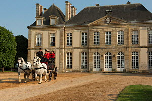 The drivingr (in black) and grooms (in red) from the Haras Du Pin, France's oldest national stud, driving two Percheron horses, harnessed to a break, in the Cour D'Honneur, at Le Pin-au-Haras, Orne, L...  -  Kristel  Richard