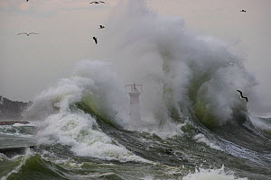 Stormy seas in Kalk Bay harbour, False Bay, Cape Town, South Africa.  -  Chris & Monique Fallows