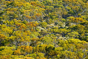 Forest surrounding Eyre Bird Observatory , Nullarbor, South West Land Division, Western Australia.  -  Roland  Seitre