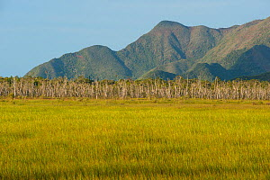 Marshland in the Kouaoua region, North Province, New Caledonia  -  Roland  Seitre