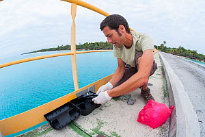 Antoine Barnaud veterinarian from the ASPO team, setting trap for Polynesian rat (Rattus exulans) as part of invasive species management project, on the Hwadrilla Wharf, Ouvea, Loyalty Islands Provinc... - Roland  Seitre