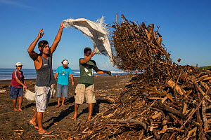 The villagers of Ostional clean the beach of driftwood after a heavy storm, that the Olive ridley sea turtles (Lepidochelys olivacea) can lay their eggs during the next arribada (mass nesting event) u...  -  Ingo Arndt